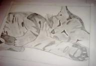 Hugo Dessin Chat endormi 3